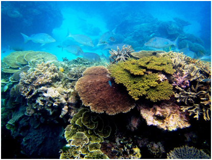 Colorful, healthy coral reef
