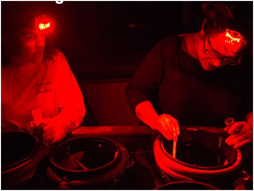 Under red light, scientists collect coral egg bundles floating up from coral fragments in the pots.